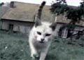 Funy Cats
