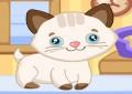 Cutie Pet Ca...